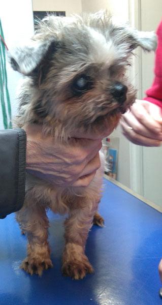 Visite vétérinaire (23 janvier 2018) Rosy-v10