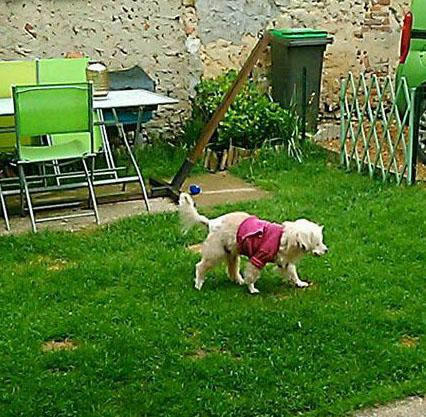 chien trouvé, état déplorable Snow-j10