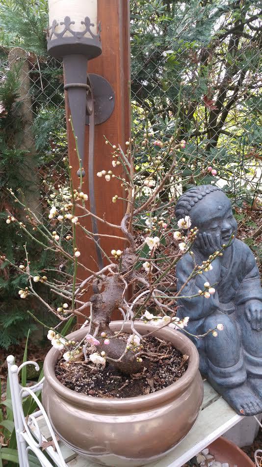 ???????????????? Prunus10