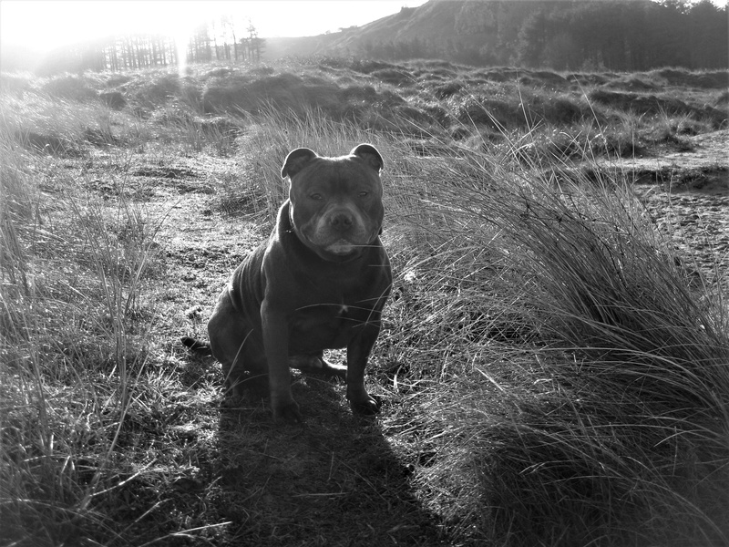 A few of our hollibobs last November  Img_7111