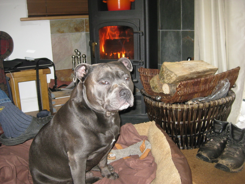 A few of our hollibobs last November  Img_7112