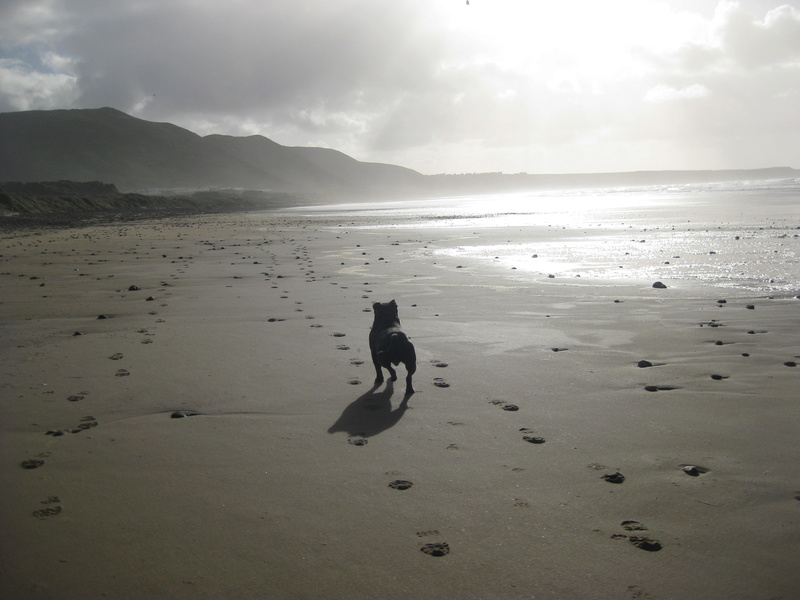 A few of our hollibobs last November  Img_7212