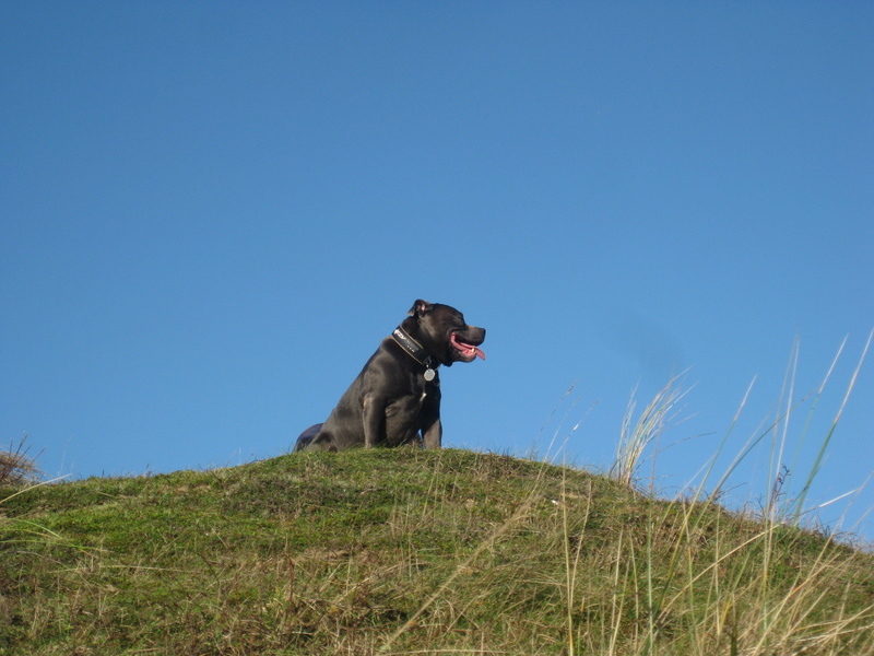 A few of our hollibobs last November  Img_7213