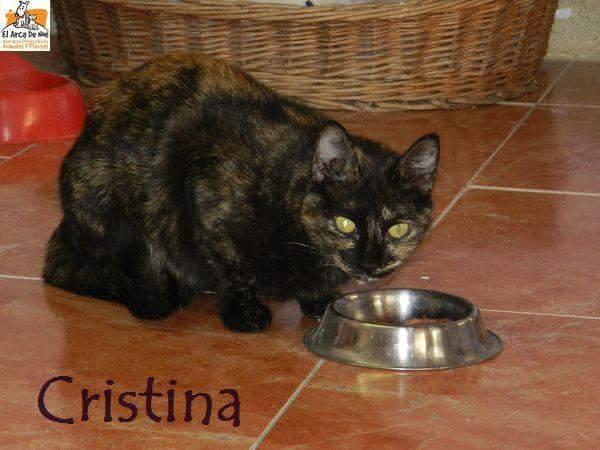 CRISTINA - ECAILLE DE TORTUE (ARCA) Fb_im450