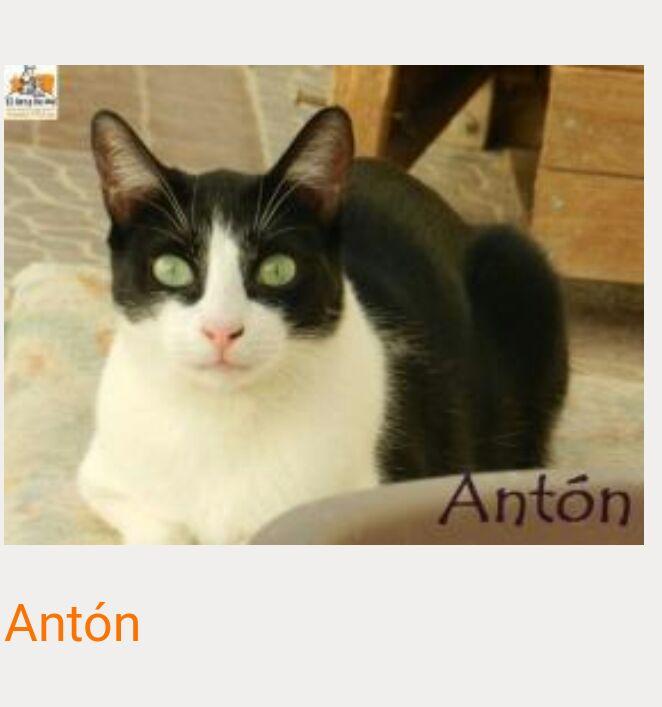 ANTON/ALBO - NOIR & BLANC - MÂLE - EN FA EN SUISSE Img-2152