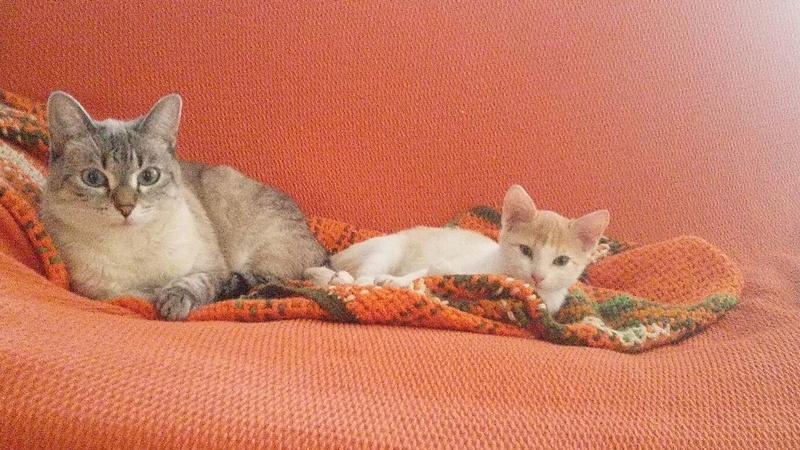 HELEN.   Rousse et Blanche.   ( Sole) Img-2207