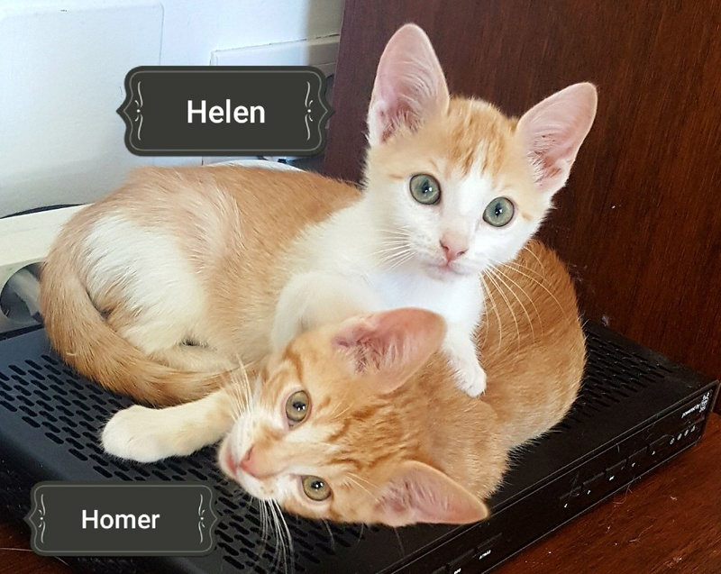 HELEN.   Rousse et Blanche.   ( Sole) Img-2209