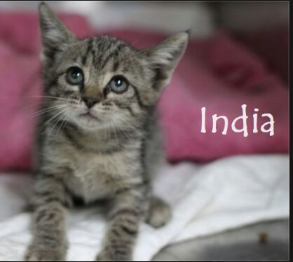 INDIA - TIGREE GRISE - JUIL 17 - En FA en Suisse Img-2769