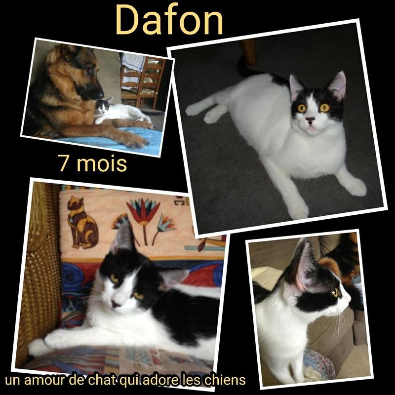DAFON - NOIR ET BLANC - EN FA DANS LE 74 Img15018