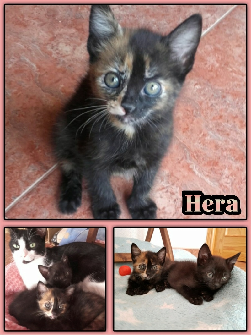 HERA/SALLY - ECAILLE DE TORTUE - ES (Sole) Img15024