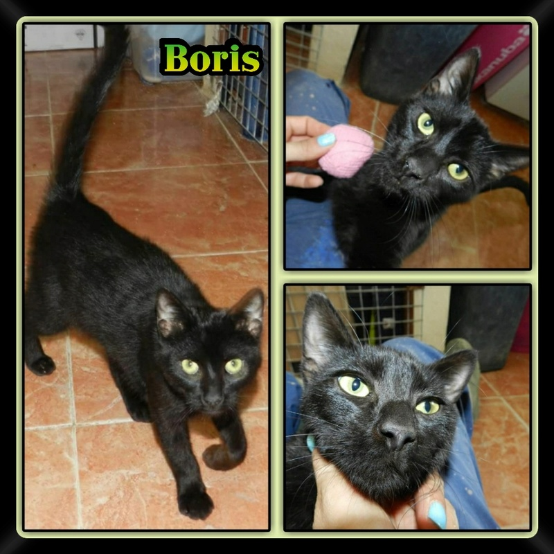 BORIS.    Noir.  ( Sole) Img15031