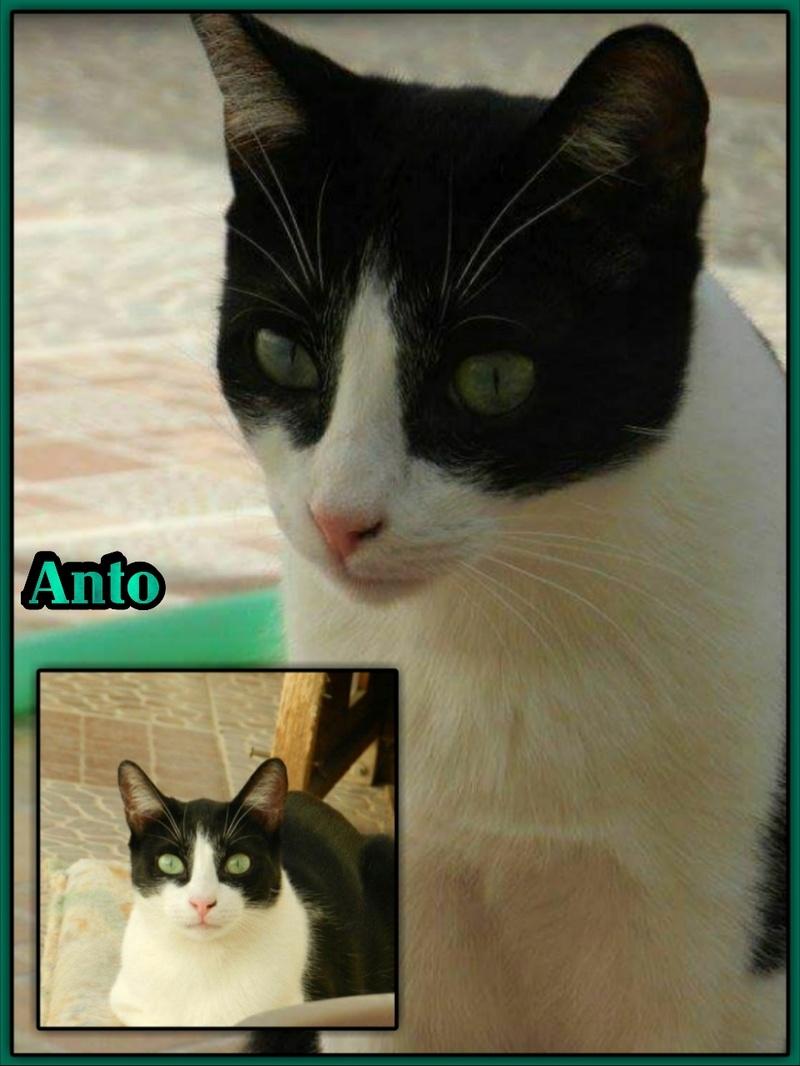ANTON/ALBO - NOIR & BLANC - MÂLE - EN FA EN SUISSE Img15033