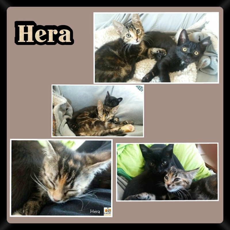 HERA.   Tigrée   ( Sole) Img15036