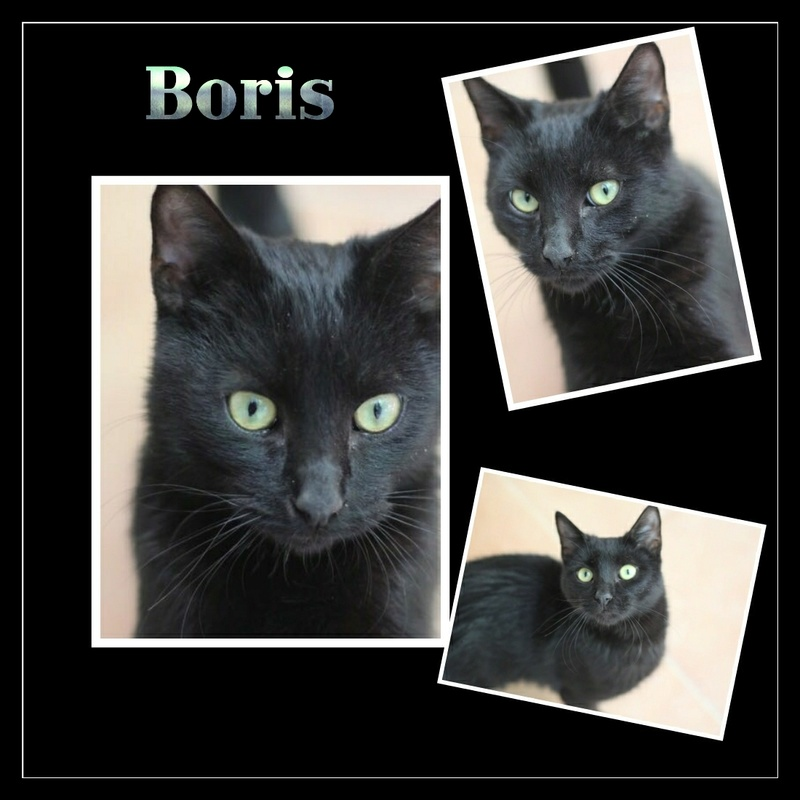 BORIS.    Noir.  ( Sole) Img15119