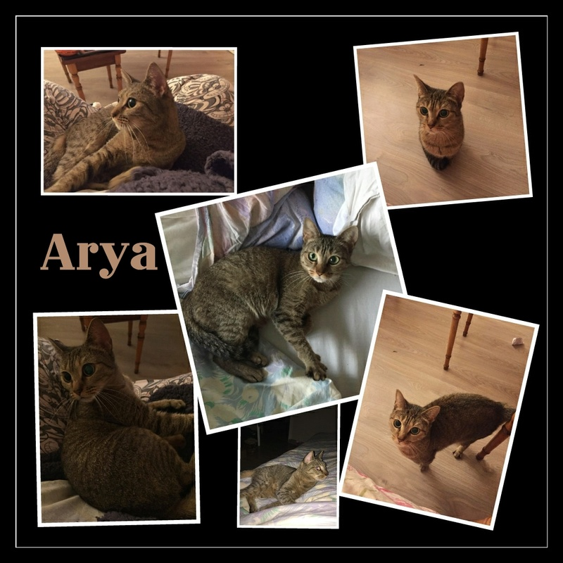 ARYA Tigrée.   FA.78 Img15121