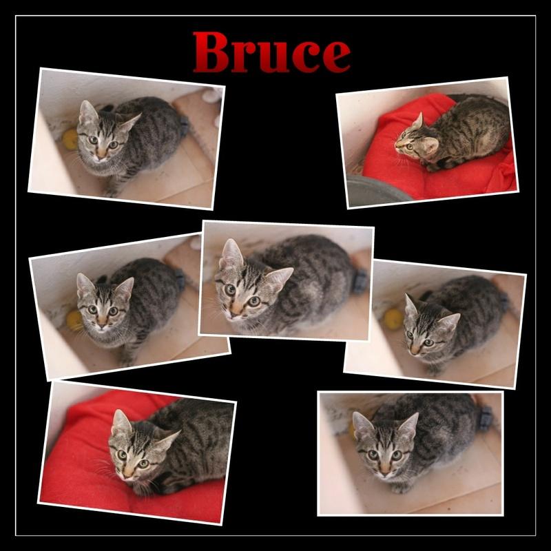 BRUCE - TIGREE - EN FA EN SUISSE Img15129