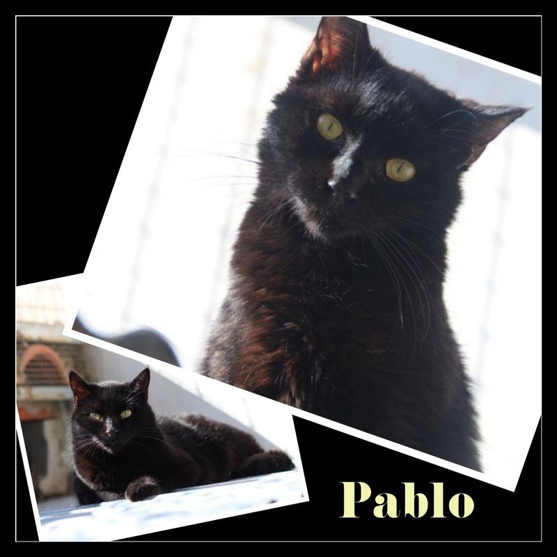 PABLO.    Noir.         ( El Arca) Img15157