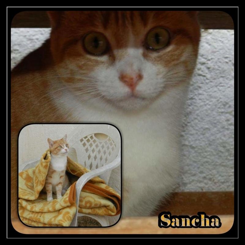 SANCHA -  Rousse & Blanche - En FA en Suisse Img15166