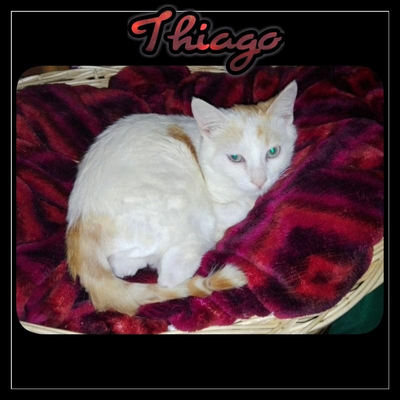 THIAGO.    Blanc & un peu de Roux. ( El Arca) Img15219