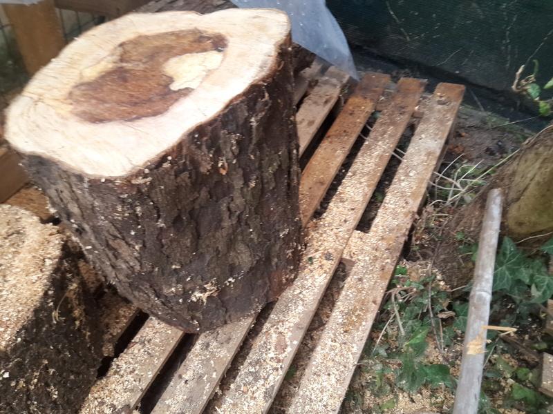 che legno è? 20180310