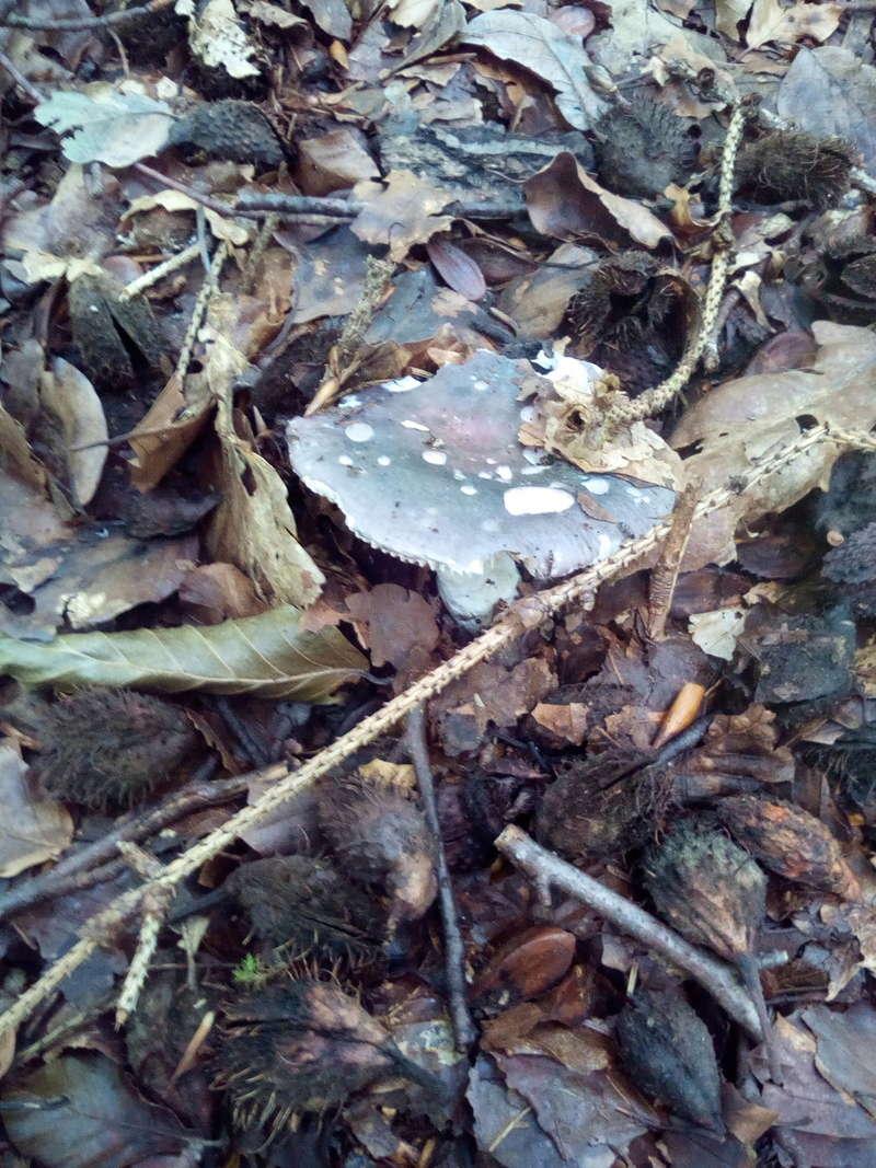 Quelques champignons... Img_2048