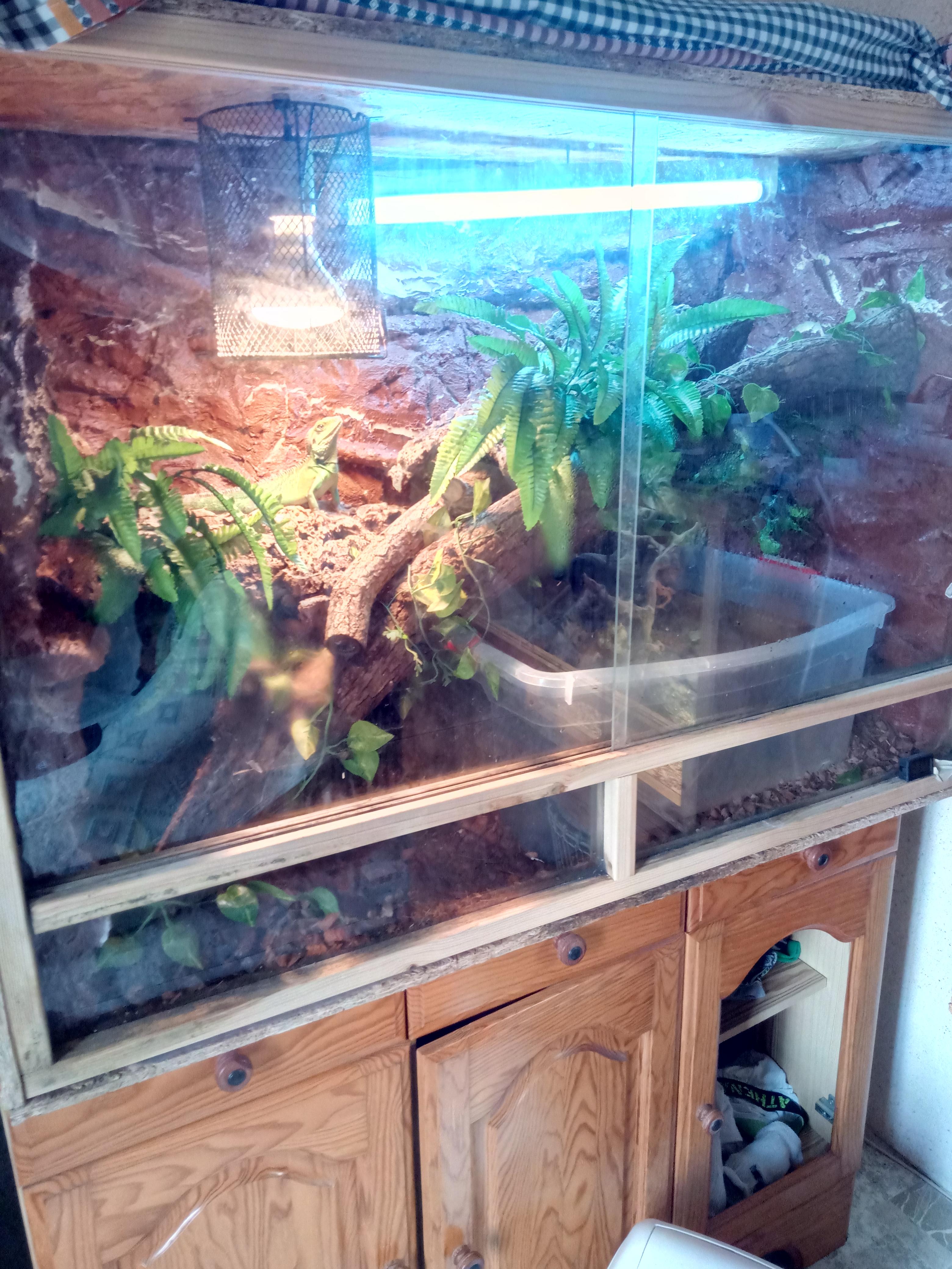 terrarium dragon d'eau Terrar11