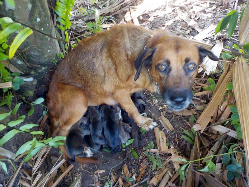 La gent canine  Chiot10