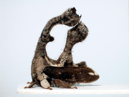 Etranges animaux Membra17