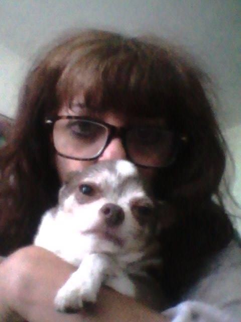 TINO petit chihuahua de 10 ans ADOPTE 22551610