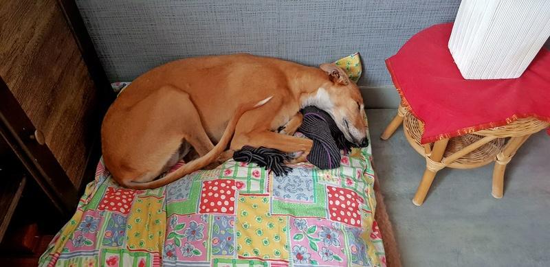 MELLINA petite crevette rousse Scooby France  Adoptée  - Page 4 23799910