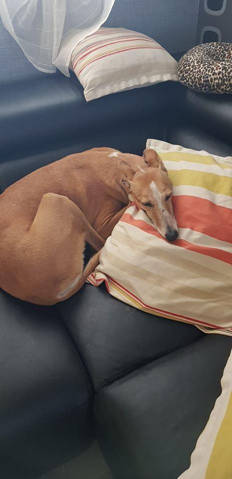 MELLINA petite crevette rousse Scooby France  Adoptée  - Page 4 23915810