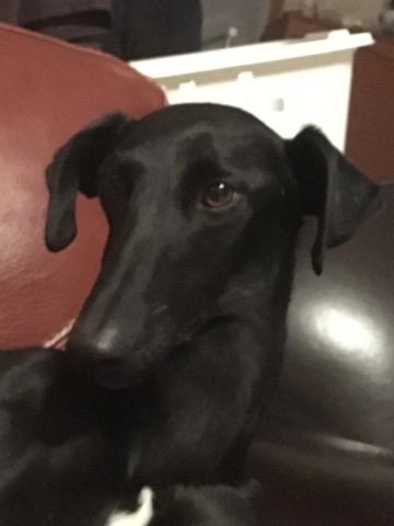 valerita galga de 2016 à l'adoption Adoptée  24726510