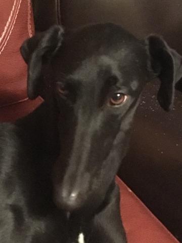 valerita galga de 2016 à l'adoption Adoptée  24740710