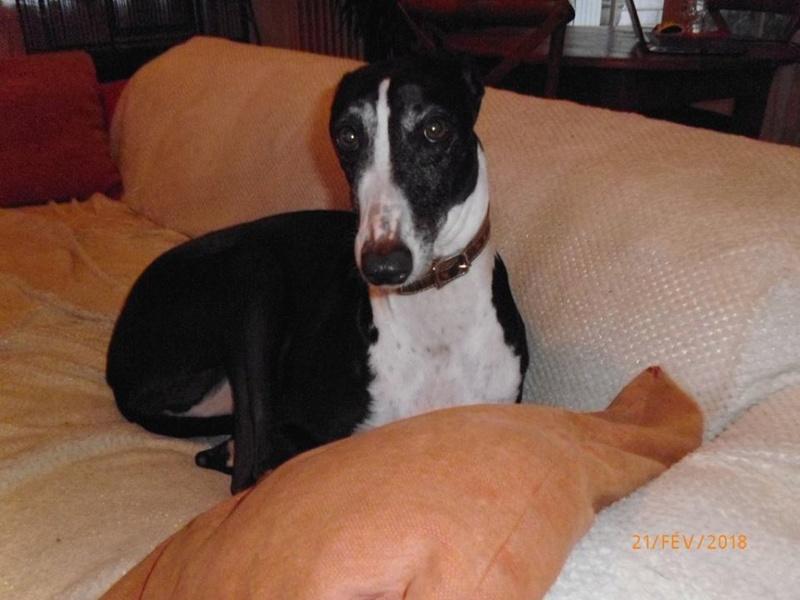 Camille galga de 7 mois à l'adoption Adoptée  - Page 2 28450310