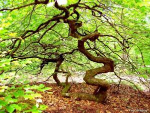 Hommages aux arbres - Page 3 Faux10