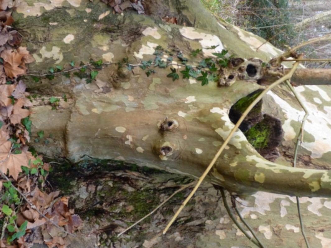 Hommages aux arbres P1020110