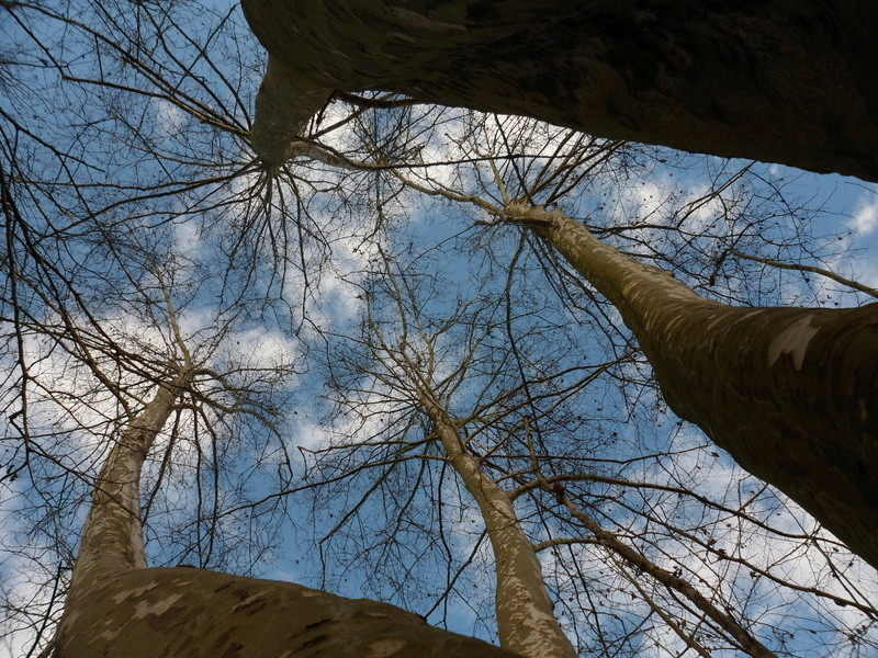 Hommages aux arbres Sam_0410