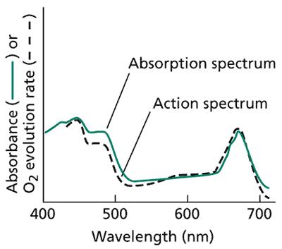 Princípios de Espectrofotometria Wt070112