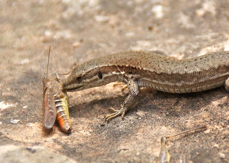 Puis-je accueillir un Gecko léopard High Yellow avec ces paramètres ? Dsc04310