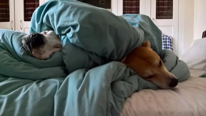 We have bedbugs! Wp_20110