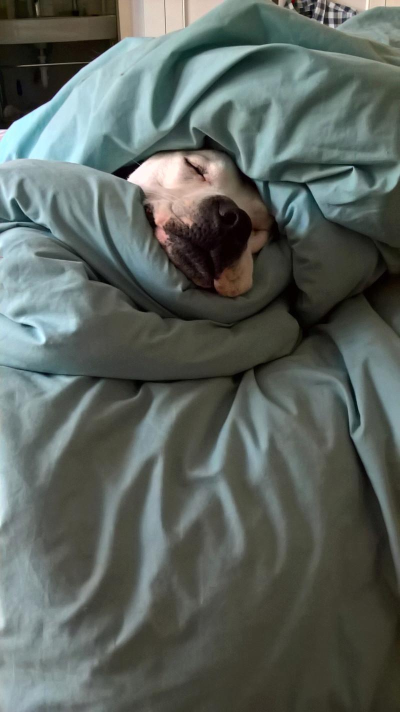 We have bedbugs! Wp_20111
