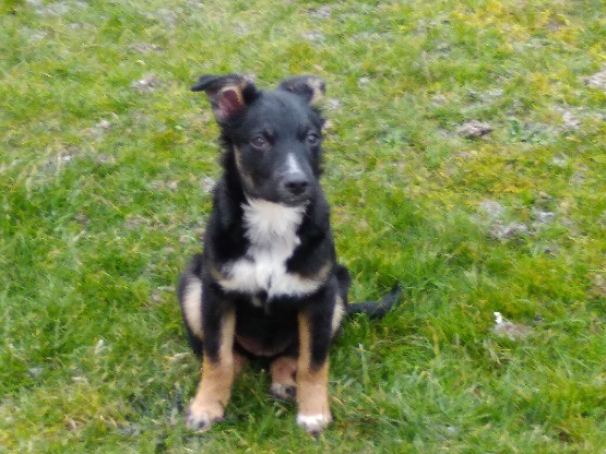 Nookie - femelle  - refuge de Târgu Frumos - Réservée adoption (67) 44c1a010
