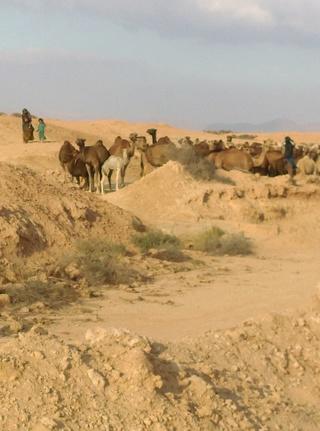 [Maroc Camp/Découverte] Camping Aaïn Nakhla à Tighmert 02510