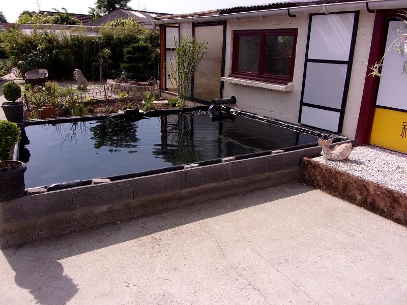 Notre bassin pour koï 101_0310
