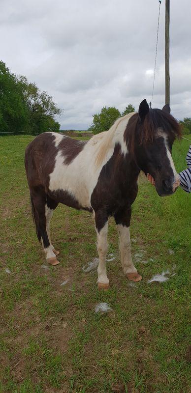 LOONY -  ONC poney né en 2001 - Adopté en juin 2011 par Carole 20180425