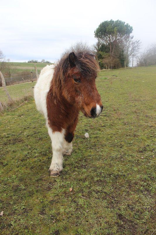 PIPO - Poney OI typé Shetland né en 1990 - adopté en septembre 2009 par Justine et Janine Img_9230