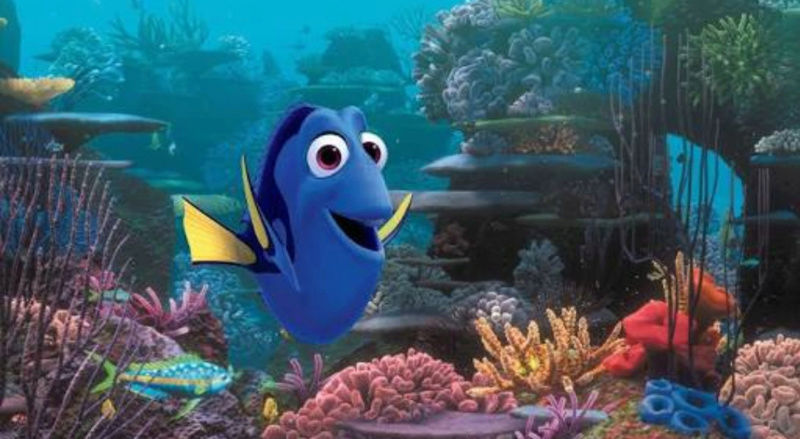 """Fact & Information About Blue Tang / Paracanthurus Hepatus a.k.a """"Dory - The Movie Star"""" 20180561"""