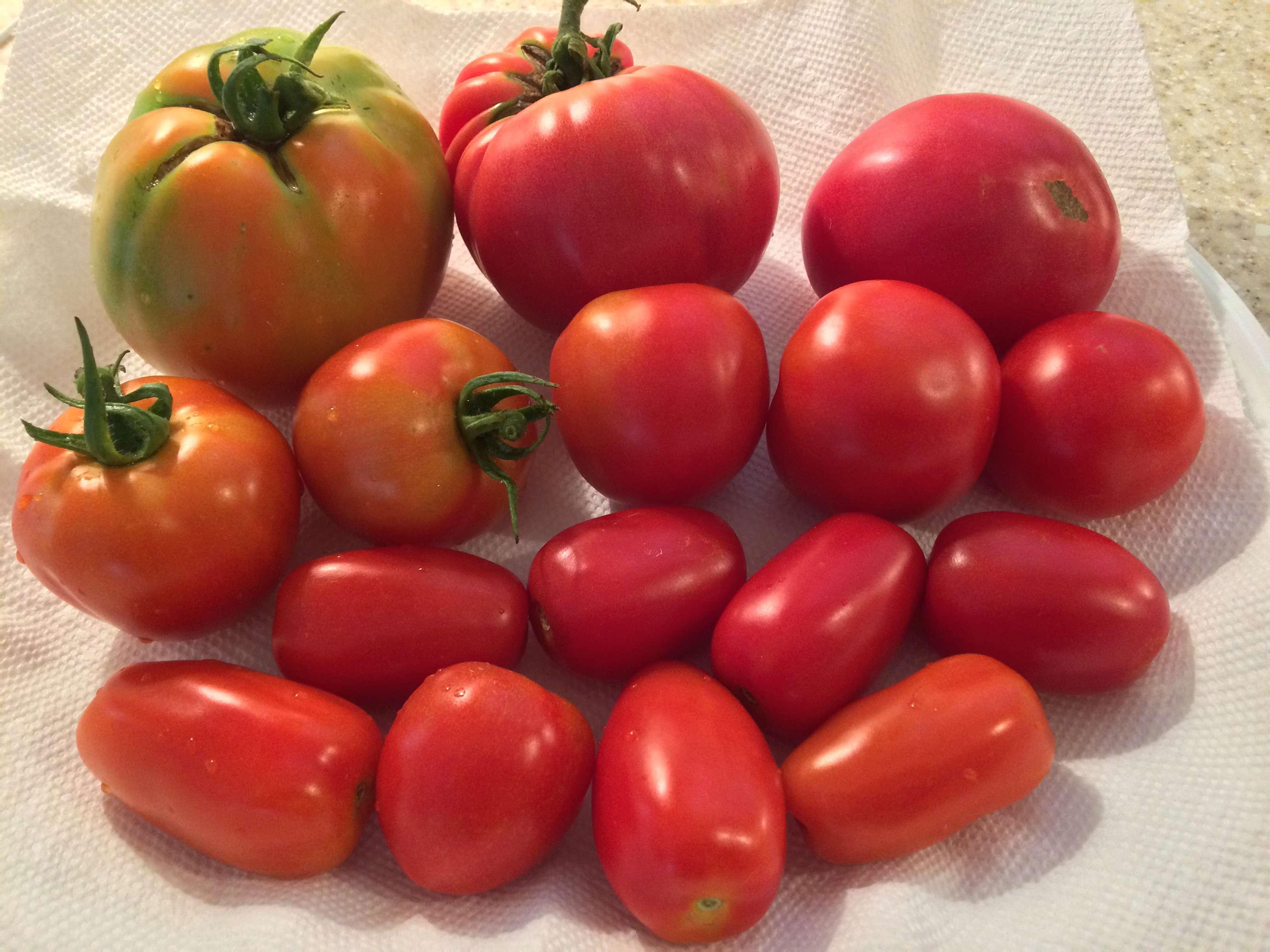 Tomato Tuesday - 2018 & 2019 - Page 3 Tomato30