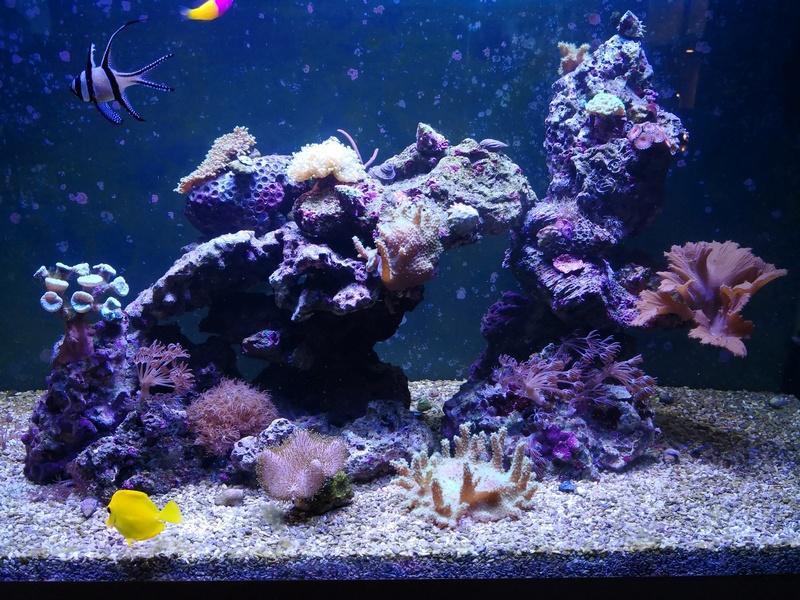 Petit bout de récif OSAKA 260 - Page 6 Aqua10