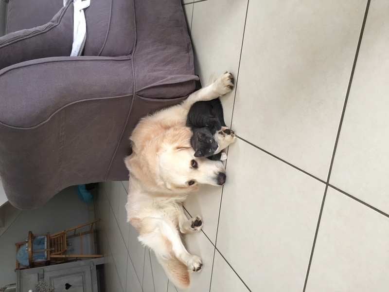 Comme chien et chat  Img_2514